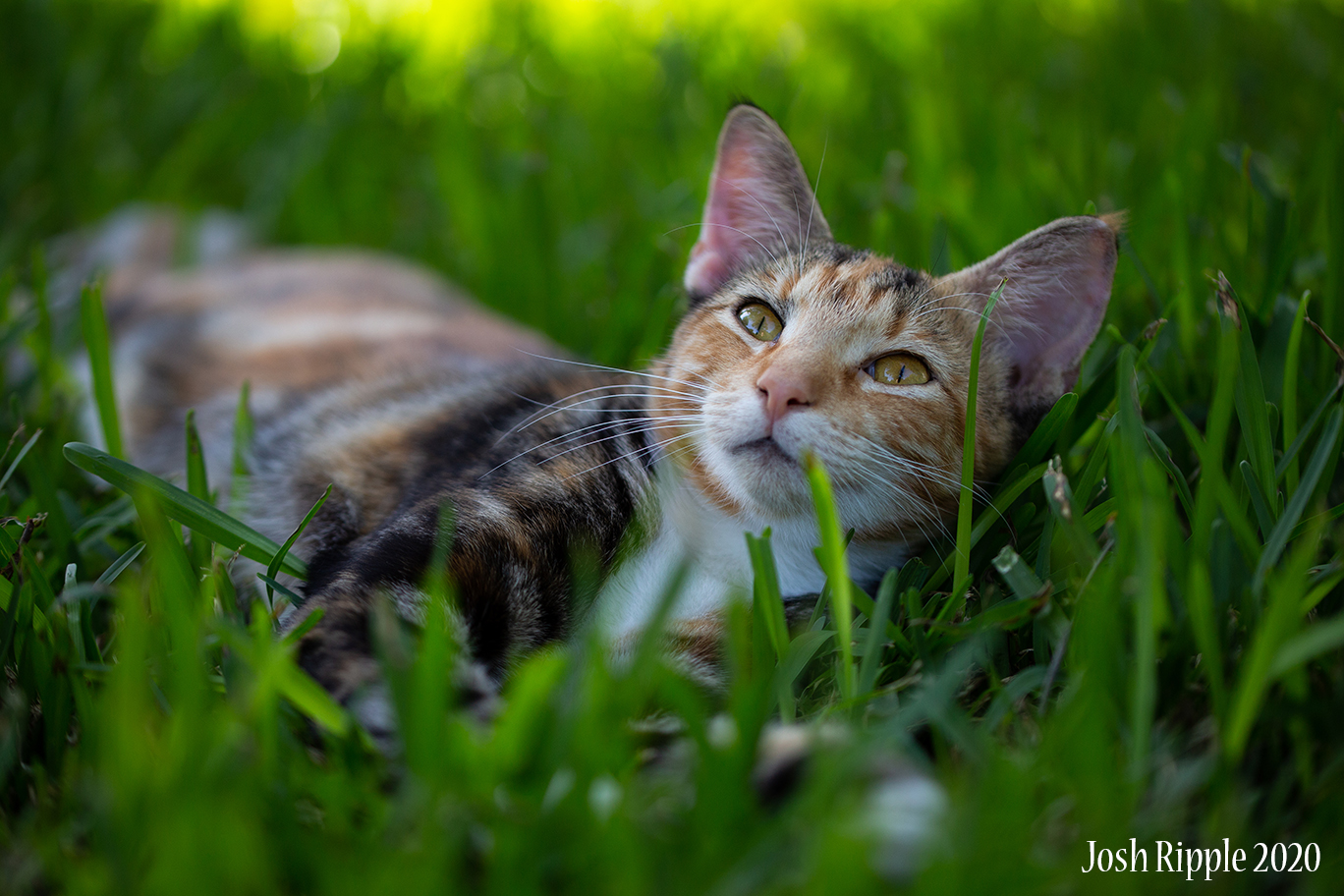 Backyard with the Cats – New Lens
